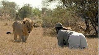 Львы, медведи, обезьяны и быки ПРОТИВ людей. Жесткие схватки.