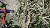 27 сен 2017. И таким любителям понравятся небольшие садики, которые легко уместятся на рабочем столе. Популярные сейчас флорариумы хороши тем, что в них живут растения, не требующие сложного ухода: суккуленты, кактусы и эффектные атмосферные тилландсии. Кроме того, это хорошая.