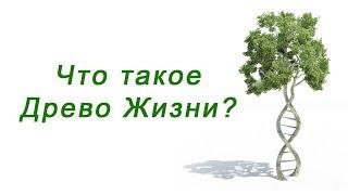 Что такое Древо Жизни ?