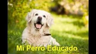 Mi Perro Me Muerde Las Manos y Los Pies