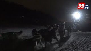 видео Метисы, хаски и маламуты: гонка на собачьих упряжках прошла на Вологодчине
