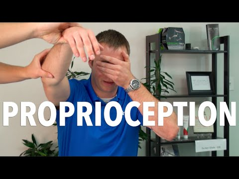 What is Proprioception and Why is it Important? | Portland Chiropractor