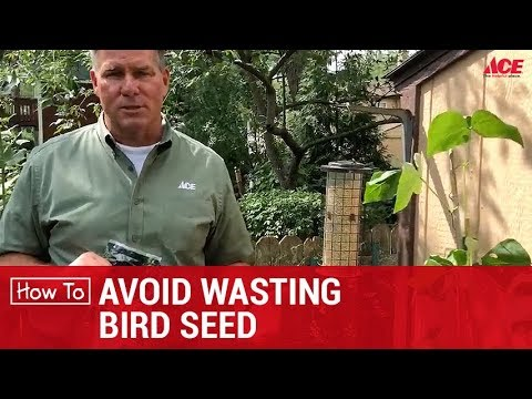 How To Avoid Wasting Bird Seed - Ace Hardware
