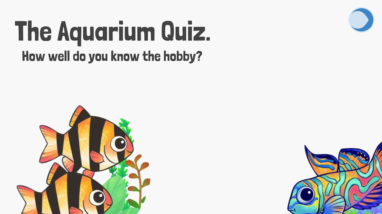 Freshwater aquarium fish quiz - Pop Quiz How Much Do You Know About Fish
