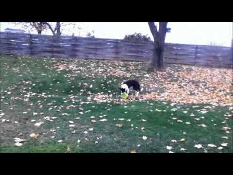 Colder fall day Nov 2011