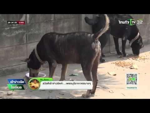 ครูใจบุญสละเงินเดือนเลี้ยงหมาจรจัด | 17-02-59 | เช้าข่าวชัดโซเชียล | ThairathTV