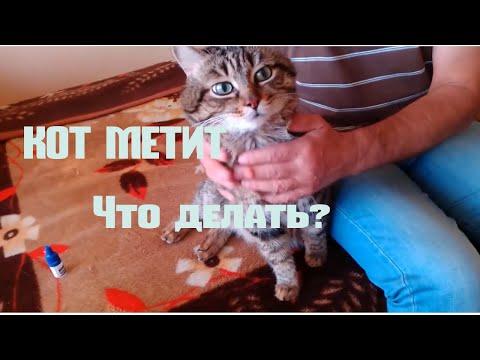 Что делать когда метит кот?