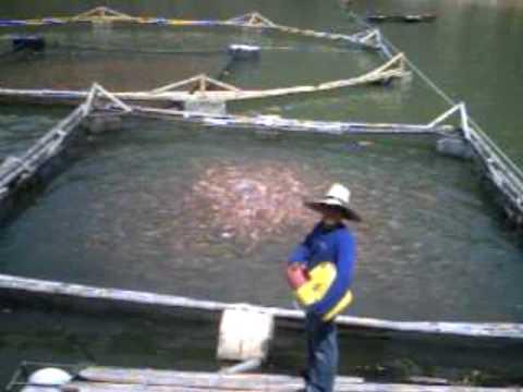 Invierte en piscicultura youtube for Elaboracion de estanques para piscicultura