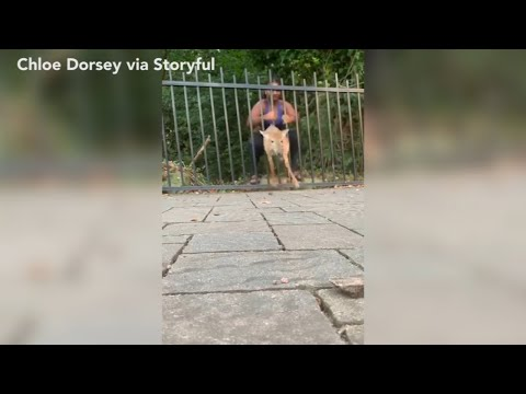 Don Action Jackson - Wedged Deer Saved From Bars TWICE By Jogger's Bare Hands
