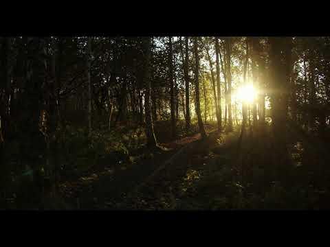Som Da Floresta E Pássaros 'Música' Para Relaxamento E Acalmar