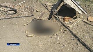 В Башкирии неизвестные расстреляли собак-инвалидов в центре передержки