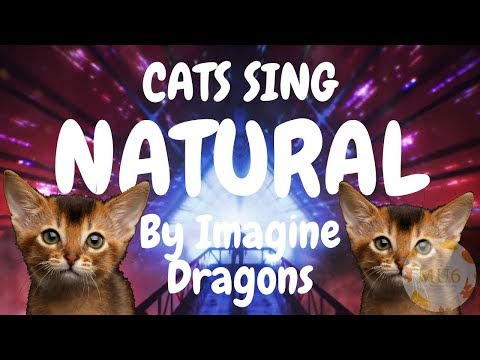Cats Sing Natural by Imagine Dragons | Cats Singing Song