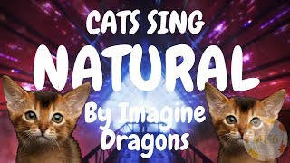Cats Sing Natural by Imagine Dragons | Cats Singing Song Video