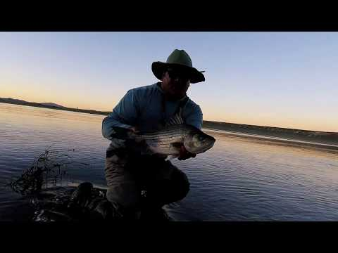 south fork reservoir, elko, nvfly fishing for trout, bass, and wipers