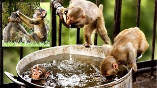 Monkeys Playing Game After Lunch Time | Animals Fun Videos | Everyday Activities of Monkeys