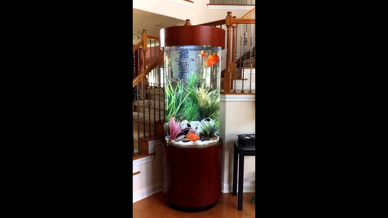 180 gallon Cylinder Aquarium  YouTube