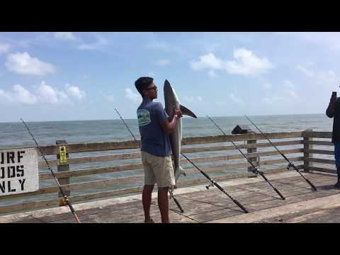 Man Catches 4 1/2 Foot Black Tip Shark At Galveston Pier!! Insane Catch