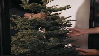 Christmas Tree Saves A Marriage