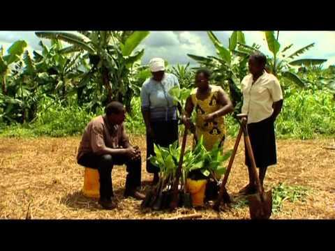 Shamba Shape Up (English) - Seed Varieties, Maize Treatment, Solar Power