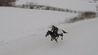 Drone Chasing Horses