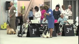 The 2014 Cocker Spaniel National - Best In Futurity