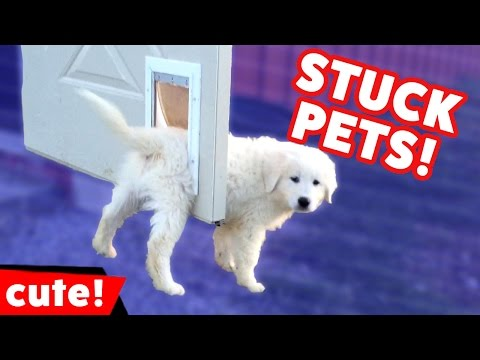 Funniest Pets Stuck In Stuff Home Videos of 2016 Weekly Compilation | Kyoot Animals
