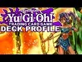 Amazoness Deck - In Depth Deck Profile and Download Link - January 2015 TCG
