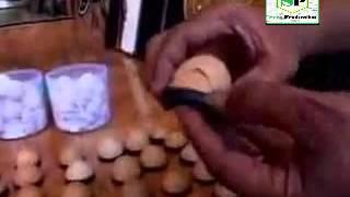 membuat kaligarfi dari kulit telur