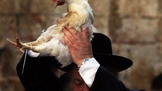 vuclip Why do Jews Swing a Chicken Over their Head on the Eve of Yom Kippur? Rabbi Tovia Singer Explains