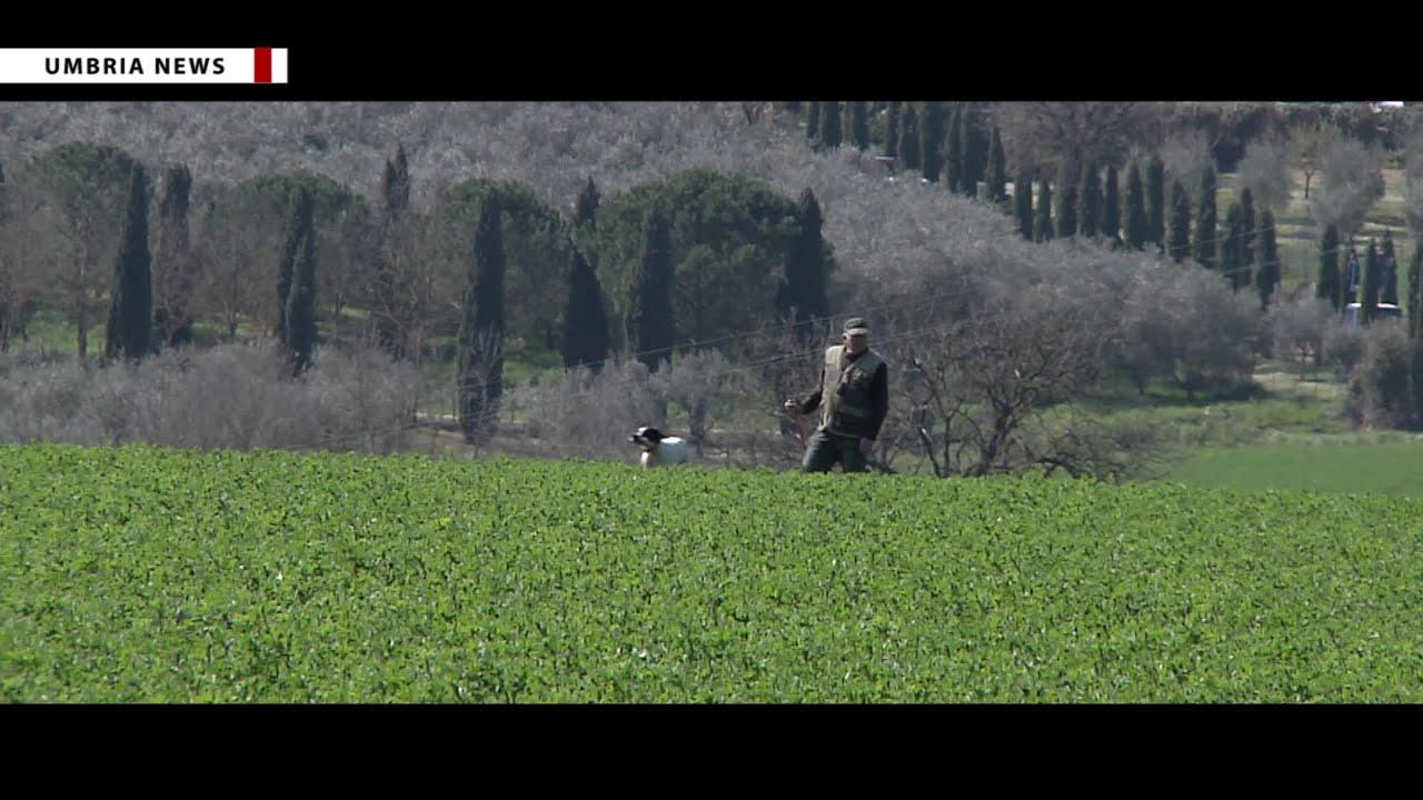 Caccia ad Aquila 1 - Punto di collisione streaming: vedere ...
