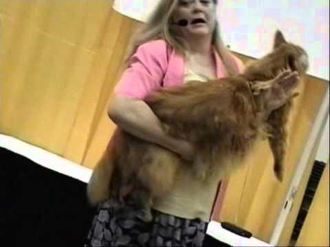 The biggest cat in Canada?