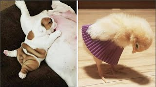 AWW CUTE BABY ANIMALS Videos Compilation cutest moment of the animals 2020 - Soo Cute! #51