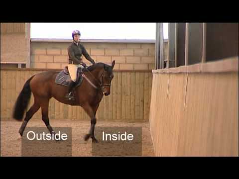 Flatwork Training For Showjumping