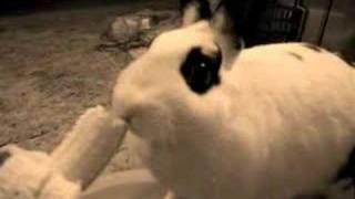 Bunny Likes Eating Apples & Bananas