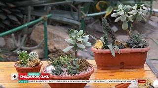 Сукуленти: догляд, вирощування, та розмноження – Садівництво для чайників
