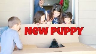 HUGE SURPRISE GIFT, KIDS GET PUPPY FOR NEW YEARS! | NEW MEMBER OF OHANA