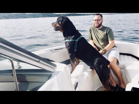 Rottweiler's first time on a boat. |08