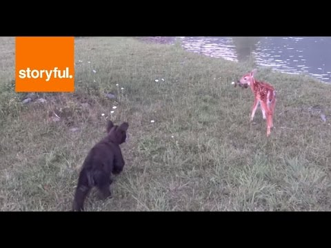 Cute Fawns Go Hiking with Bear Cubs (Storyful, Wild Animals)