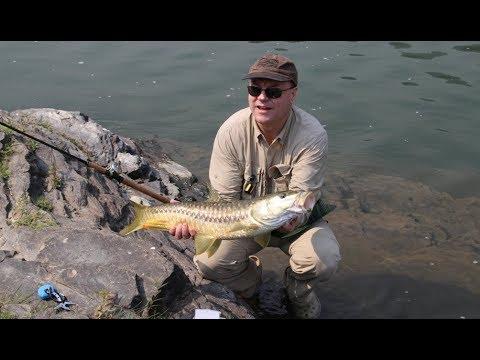 Fishing Golden Mahseer, Ramganga River 2016