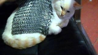 Бронежилет для кота