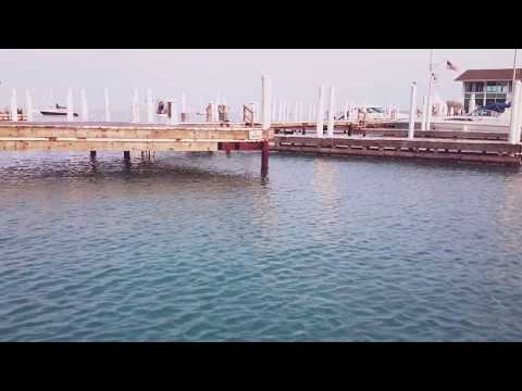 Mystery Fish in Lake Michigan-Chicago
