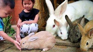 Yuk Kasih Makan Kelinci Lucu!!! - Mengenal Hewan & Liburan Sekolah di Batu Malang Taman Kelinci