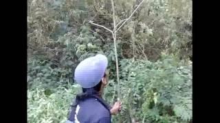 Cara mikat burung sirtu&sogok ontong di pedesaan