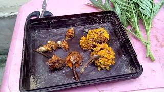 How To Grow Meri Gold From Seeds//genda Ke Paudhe Ke Liye Bij Se Paodh Kaise Banaye In(hindi & Urdu)