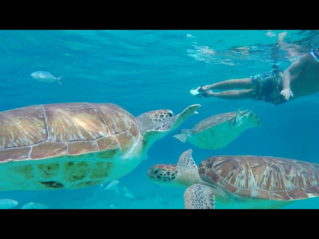 Turtles Tour - snorkeling with turtles!
