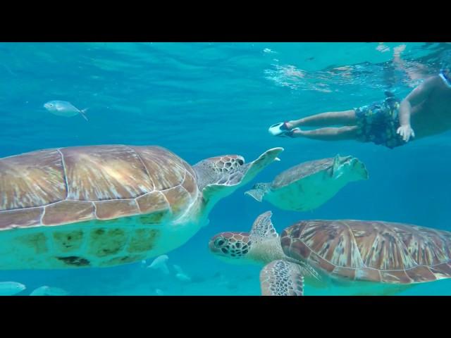 Turtles Tour - snorkeling with turtles!