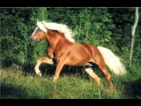 El pony salvaje (hueco) XD