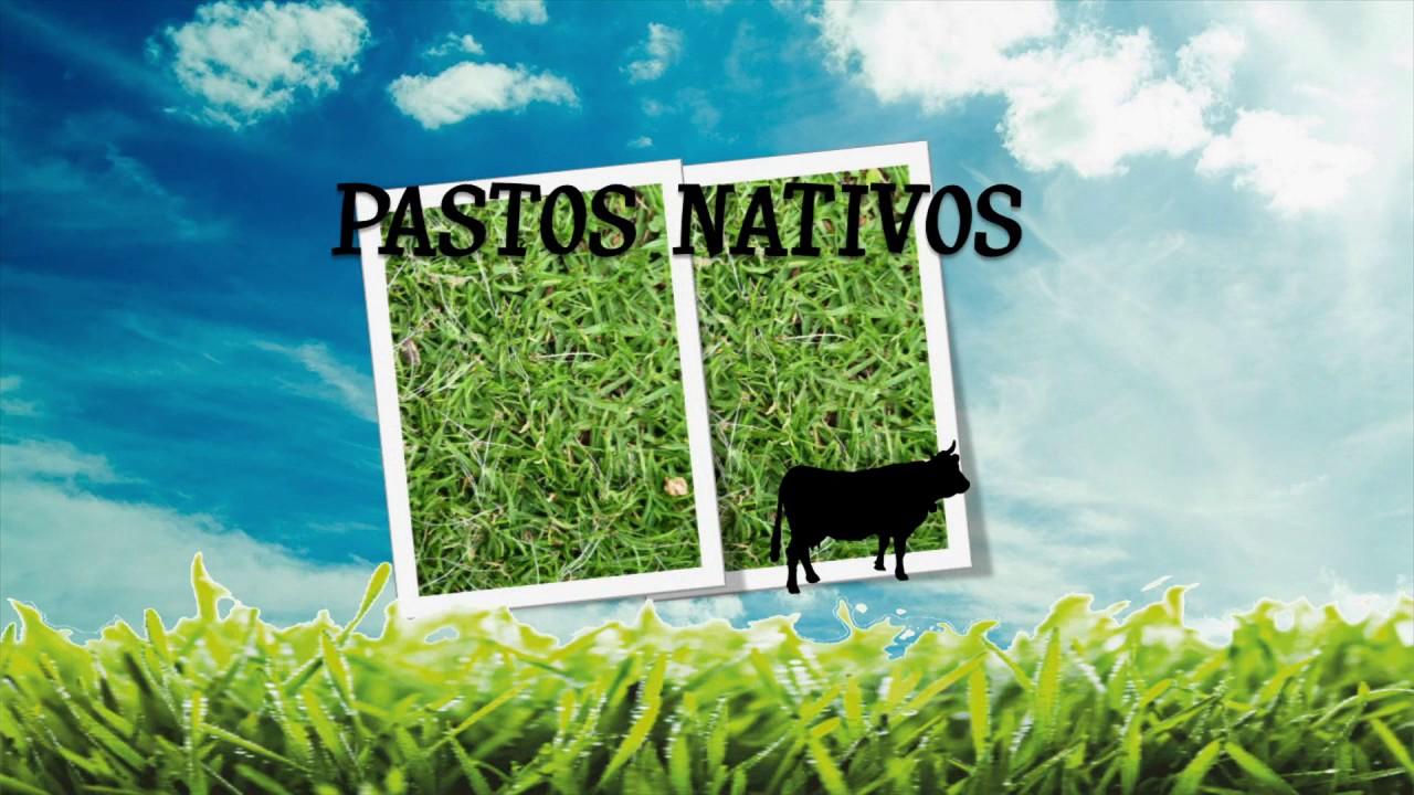Tres tipos de pasto recomendados para ganado lechero la for Tipos de estanques para acuicultura