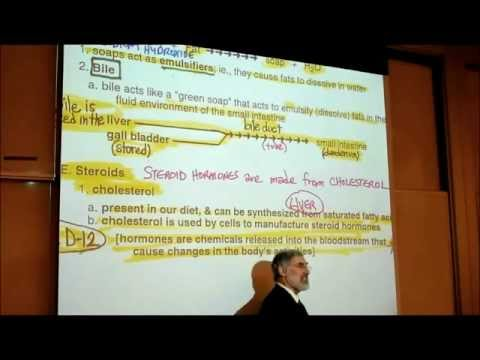 CHOLESTEROL & STEROID HORMONES by Professor Fink
