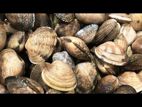 Coastal Foraging: Catch And Cook CLAM LINGUINE W/ Fishing Chef!